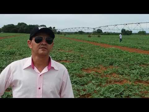 Depoimento de produtor, uso do Protex, Formoso do Araguaia To