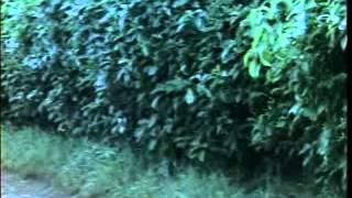 Video Buaye Gile 1974 MP3, 3GP, MP4, WEBM, AVI, FLV Juli 2018