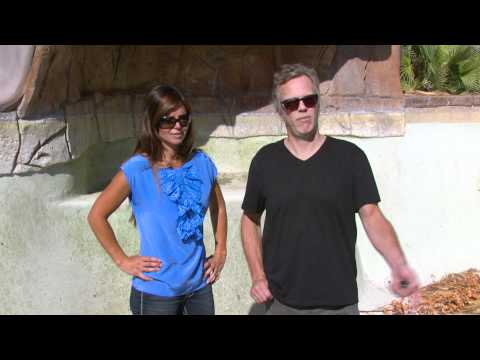 Las Vegas House Flipping Free Video And Related Media