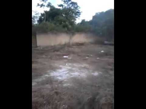 PORCOS INVADEM CARACARAI KKKKK BARATO MUITO LOUCO
