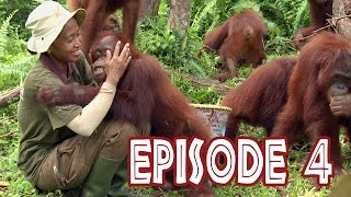 "Video We Love Orangutans - ""Babysitter Coordinator, Sri Rahayu"" MP3, 3GP, MP4, WEBM, AVI, FLV September 2018"