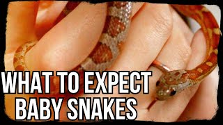 WHAT TO EXPECT: BABY SNAKES (tips, tricks and must-knows) by Jossers Jungle