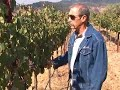 Walking Sonoma Mountain Cabernet Vineyards - Deerfield Ranch Winery Video
