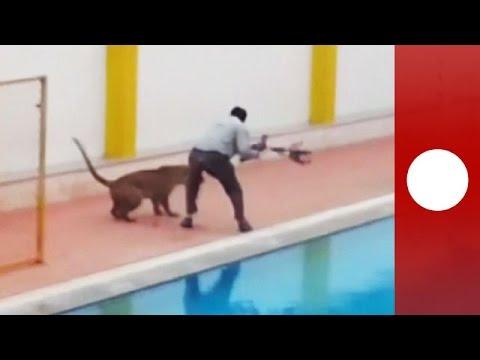 Leopard Runs Wild Around India School