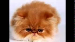 Nonton Ellies Mad Sad And Bad Animal Jam Film Subtitle Indonesia Streaming Movie Download