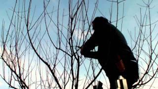 #292 Schneiden im Garten 2011 - Apfelhochstamm Wildmauser 3v6