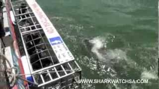 Kleinbaai South Africa  city pictures gallery : Shark cage diving @ Gansbaai, South Africa
