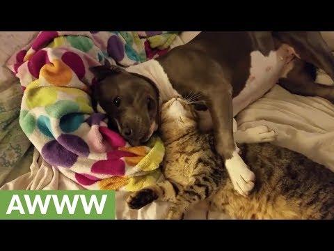 cane-e-gatto-migliori-amici