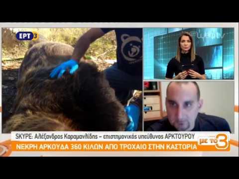 Νεκρή αρκούδα στην Καστοριά | ΕΡΤ