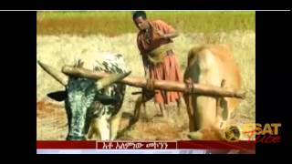Real Ethiopian News :Amhara Sisedeb