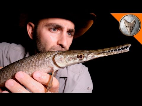 Coyote Peterson Encounters Bizarre Creatures in