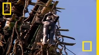 Forget about bungees...these brave men toss themselves off makeshift towers with nothing but vines tied to their ankles.