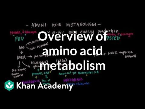 Mcat Test Prep >> Overview of Amino Acid Metabolism (video) | Khan Academy