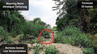 Video Mancing belut Besar sampai Tersesat di tengah hutan MP3, 3GP, MP4, WEBM, AVI, FLV April 2019