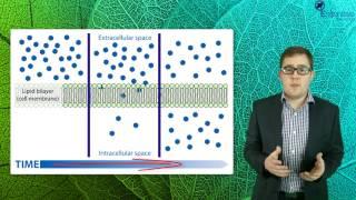 Essentials Concept Video - Movement Through Membranes