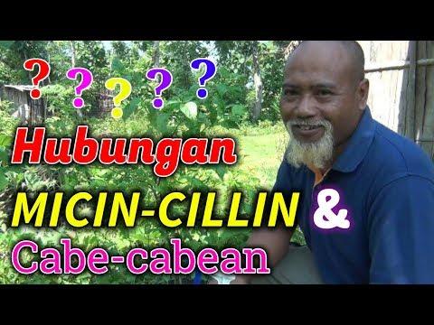 Download Video Pak Ndul - HUBUNGAN MICIN-CILLIN DENGAN CABE CABEAN
