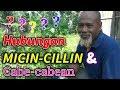Download Lagu WAGU Pak Ndul - HUBUNGAN MICIN-CILLIN DENGAN CABE CABEAN Mp3 Free