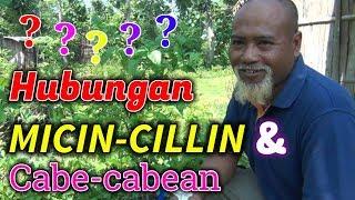 Video Pak Ndul - HUBUNGAN MICIN-CILLIN DENGAN CABE CABEAN MP3, 3GP, MP4, WEBM, AVI, FLV Mei 2019