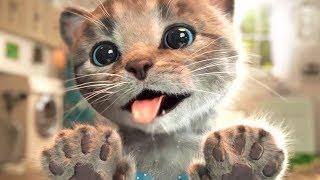 Lindo Gatito Aventuras - Educación de animación dibujos animados | Capítulo 2