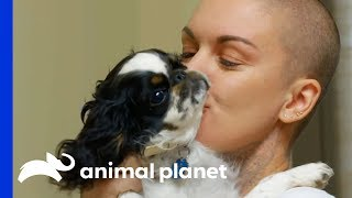 English Toy Spaniel With A Severe Heart Murmur Gets Medical Help | Amanda To The Rescue by Animal Planet