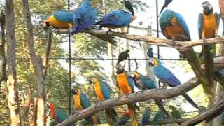 BANGKOK SAFARI WORLD -FULL DAY TOUR- ORIGINAL VIDEO Only For 900/- Thb Per