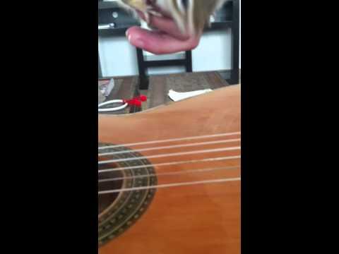 squirrel playing the guitar !! Ardilla tocando la Guitarra (видео)