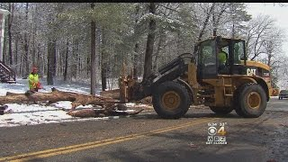 Brookline Residents Cleaning Up After Snow, Wind Knock Down Trees