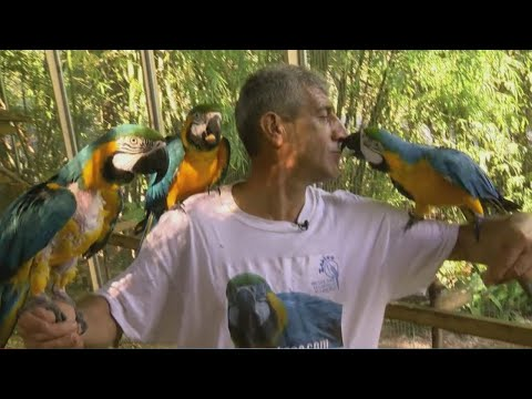 Tampa Bay bird sanctuary captures worldwide attention