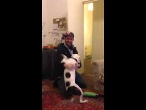 Rescue Dog Cannot Contain His Excitement When His Owner Comes Home