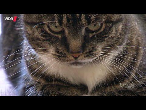 Katzen: Können Katzen Menschen lieben? | WDR