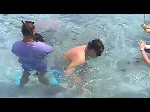 Cápa és rája Piknik Bora Bora