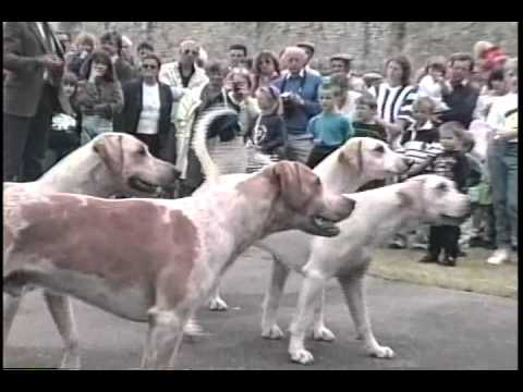 Duke of Beaufort's Foxhound Pack   Open Day 1992