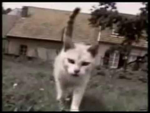 gatti alla riscossa - compilation divertente!