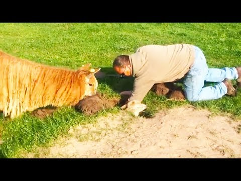 Video Ozzy Man Reviews: Alpaca in a Hole download in MP3, 3GP, MP4, WEBM, AVI, FLV January 2017