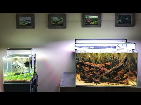 My home aquascapes - 50K Special Update_Aquarium. Best of the week