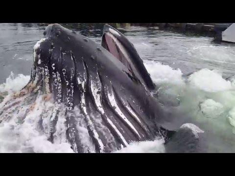 他們在碼頭看到水中有一點動靜以為有大魚要出現了,但沒想到比他們想像的大100倍!