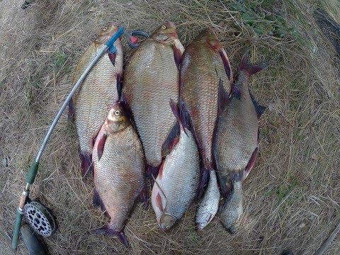ночная рыбалка на волге видео