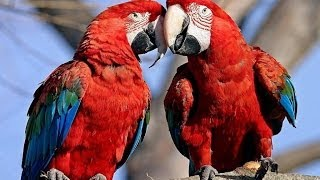 Parrots: Majestic Birds (Nature Documentary) full download video download mp3 download music download