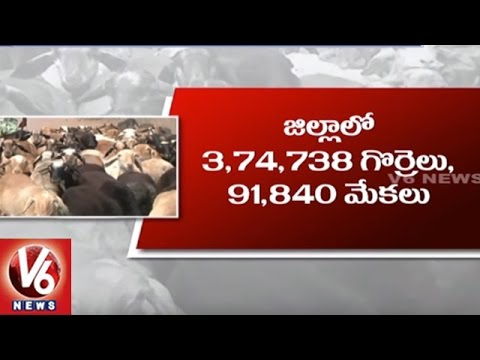 CM KCR Plans To Grant 5400 Sheep Units With 75% Subsidy In Karimnagar