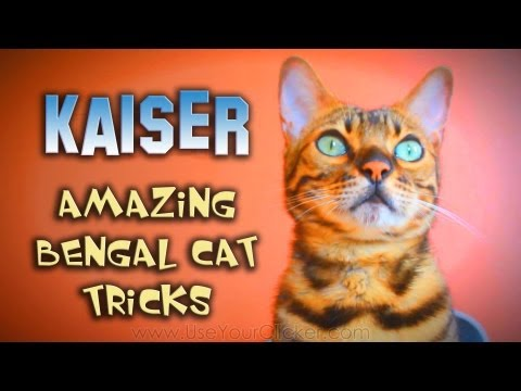 Kaiser The Amazing Bengal: Amazing Cat Tricks
