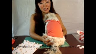 ✂ DIY Dog Clothes: Make Easy 5min Pattern Free Spaghetti Shirt for Dogs ♡ - YouTube