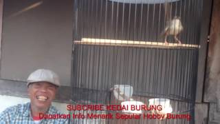 Download Video Kakek Tua dan Ciblek Gunung yang Ngebreeeen - Bikin Hati Kakek Bahagia MP3 3GP MP4