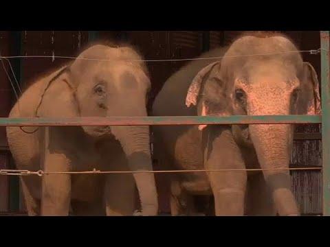 Ινδία: Άνοιξε το πρώτο νοσοκομείο για ελέφαντες