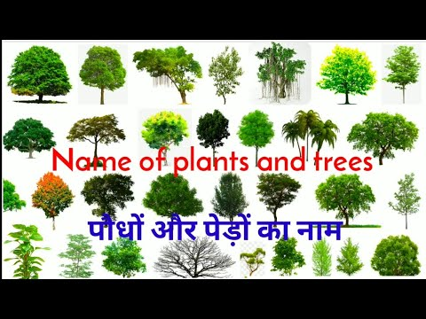 पौधों और पेड़ों का नाम || Name of plants and trees || Trees name || Easy english learning process