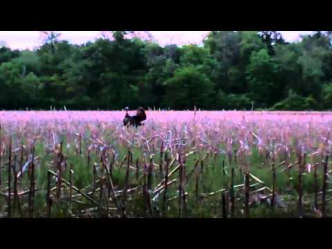 2012 Illinois Turkey Hunt