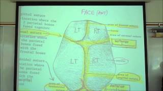 THE SKELETAL SYSTEM; INTRO TO OSTEOLOGY By Professor Fink