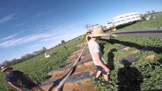 Chinchilla Australia  city photos : Melon Picking - Australia Backpacking - Chinchilla, Queensland