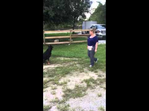 ARC Beaucerons - Obedience Training
