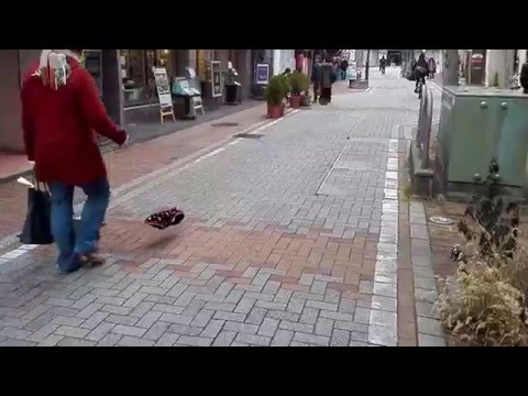 日本街頭出現一名牽著「會向人叫的隱形狗狗」的怪人,後來才真相大白原來透明狗狗是…
