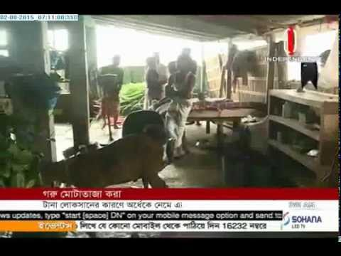 Cattle fattening halved due to losses (02-08-2015)